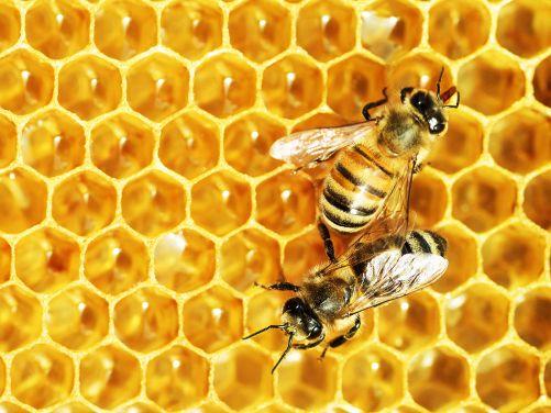 Včelí tanec (Zdroj Shutterstock)
