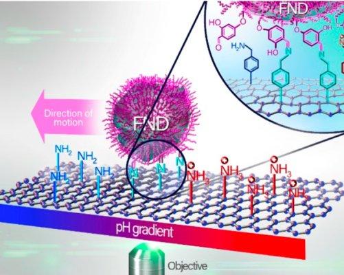 Schematické znázornění experimentu pohybu nanočástice po povrchu grafenu. FND je zkratka pro fluorescenční diamant. (Zveřejněno se souhlasem ACS Nano, American Chemical Society 2018.)