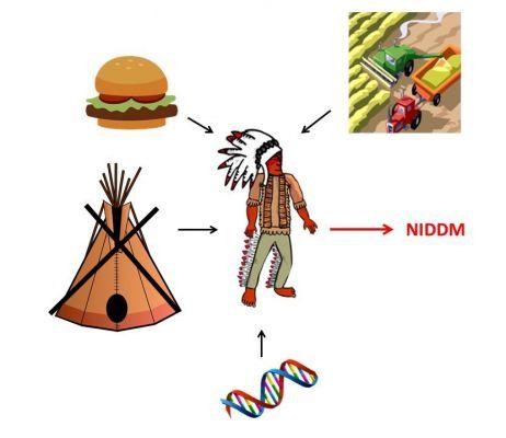 Faktory, které přispěly k rozvoji diabetu mellitu nezávislého na inzulínu (NIDDM) u Pima indiánů. Piktogramy naznačují vlivy ve způsobu života, stravovací návyky a genetické dispozice. (Kresba autor)