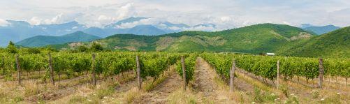 Gruzie má 8 000 let tradici pěstování a výroby vína (zdroj AdobeStock)