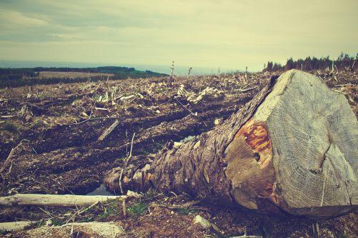 Spalování dřeva není uhlíkově neutrální energetický zdroj! (Fotka od Picography z Pixabay)