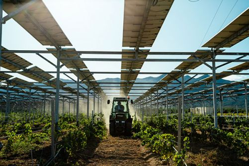 Agrovoltaická struktura, Tresserre, Francie  (Zdroj: ©Sun'Agri)