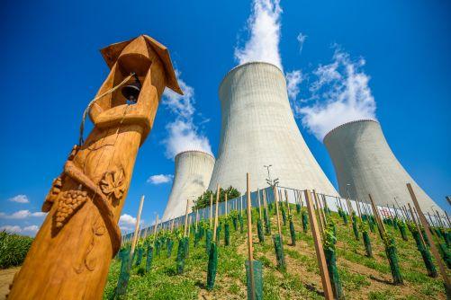 Jaderná vinice u elektrárny Dukovany (foto ČEZ)