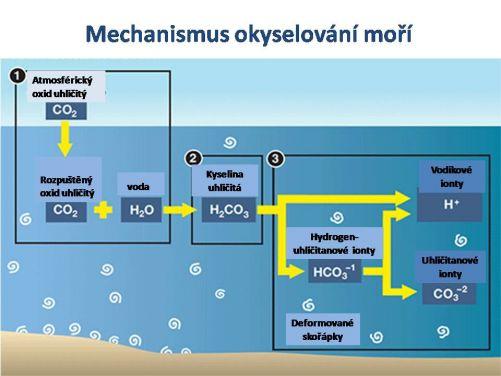 Chemie okyselování moří (zdroj IAEA)