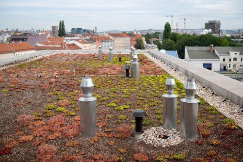 Inovační centrum Svatopetrská v Brně, zelená střecha (autor Vojta Herout)